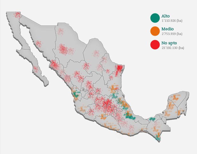 Produccion De Cafe En Mexico
