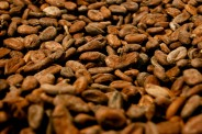 cocoa2-bsp